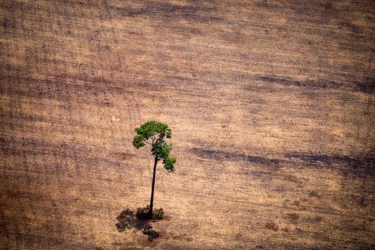 Crimes contre l'environnement : la justice pénale internationale dans l'impasse