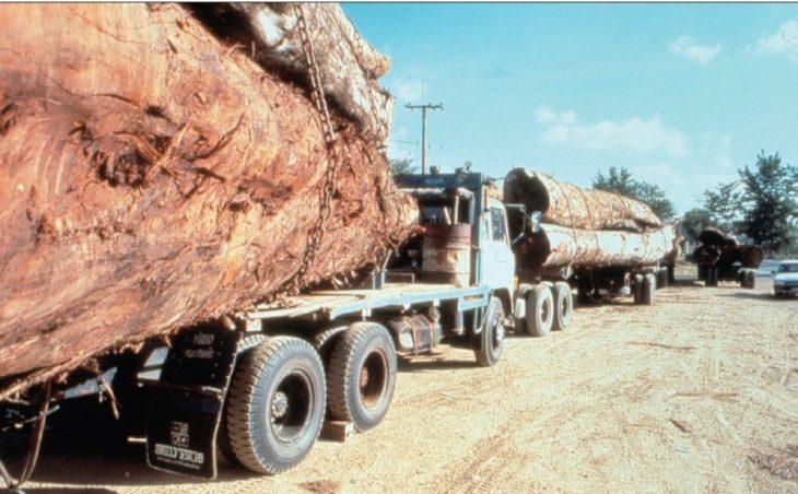 ICC prosecutors put new focus on ecological harm, land grabs